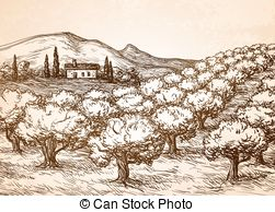 Olive grove Vector Clipart Illustrations. 208 Olive grove clip art.