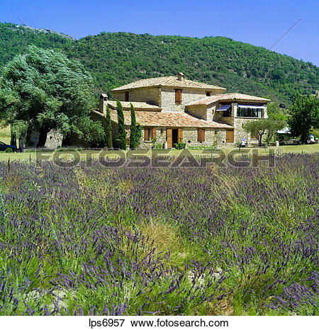 Picture of pr lavender and renovated water driven olive mill house.