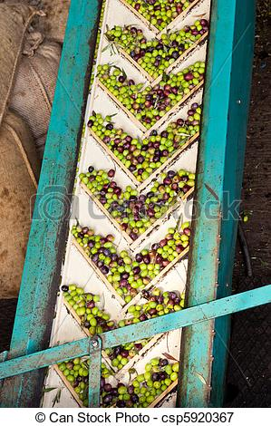 Picture of Olive Mill Conveyor Belt Feed.
