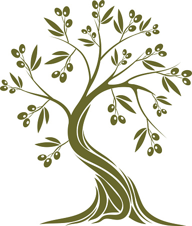 Olive root clipart #7