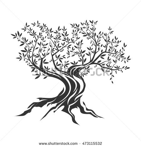 Olive root clipart #11