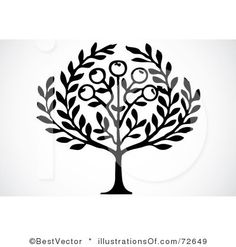 Olive root clipart #8
