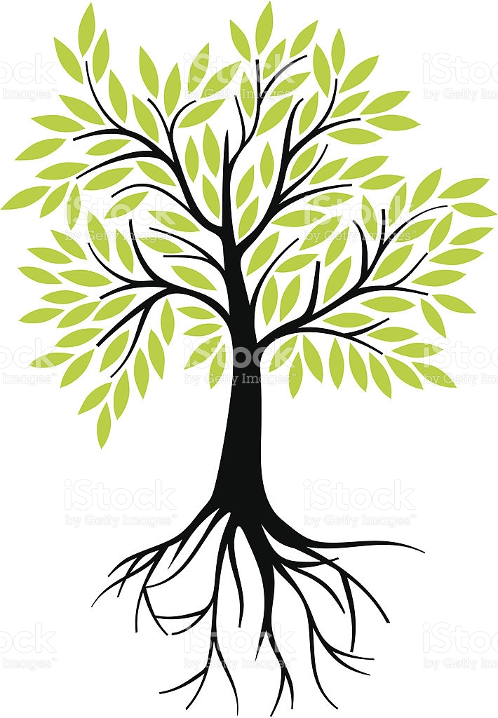 Olive Tree With Roots stock vector art 165944507.