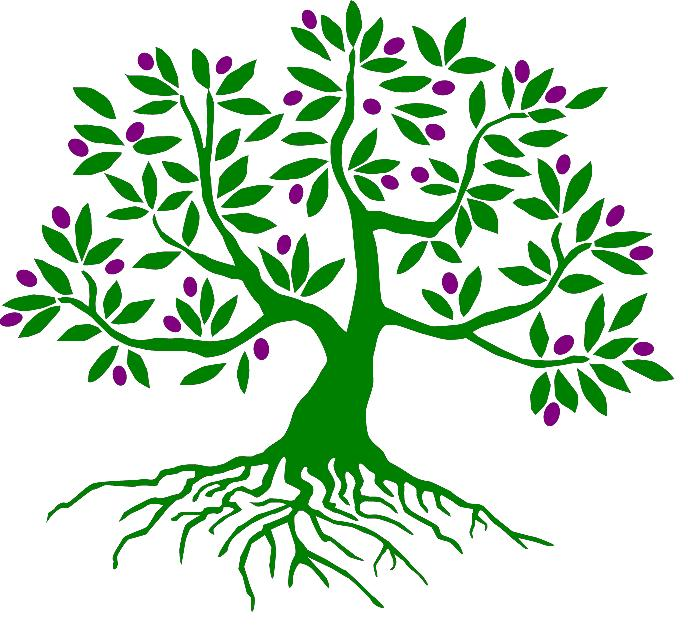 Olive root clipart #19