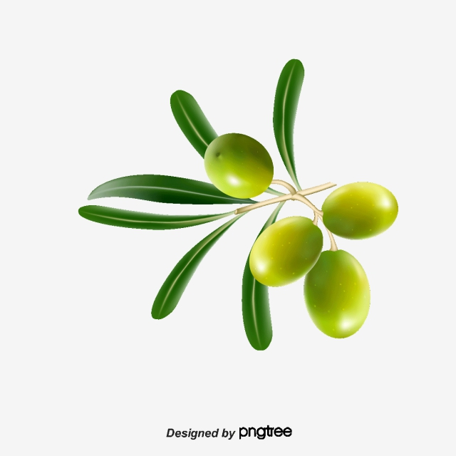 Olive Tree Png, Vector, PSD, and Clipart With Transparent.