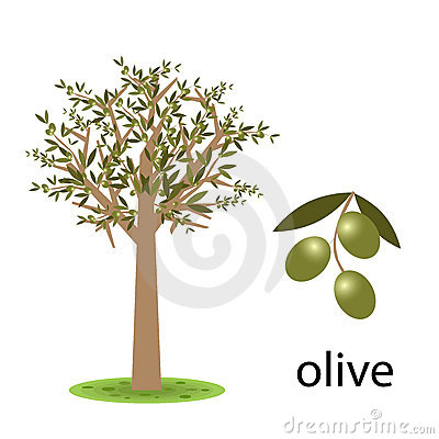 Clipart olive tree.