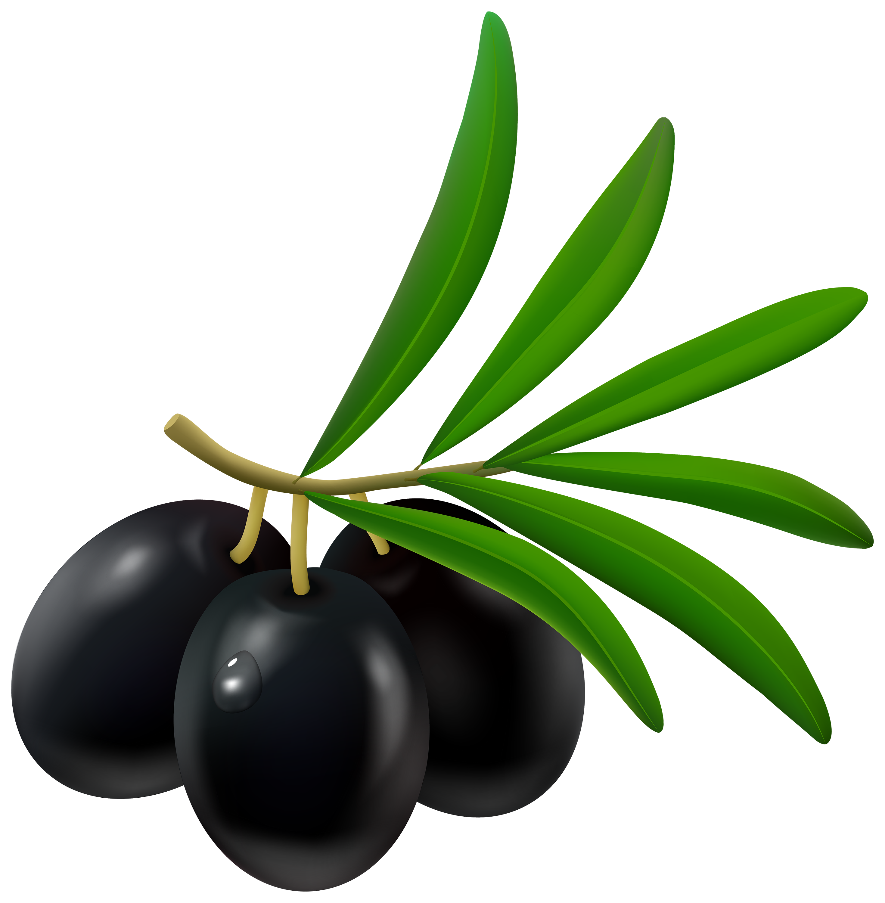 Olives png clipart images gallery for free download.