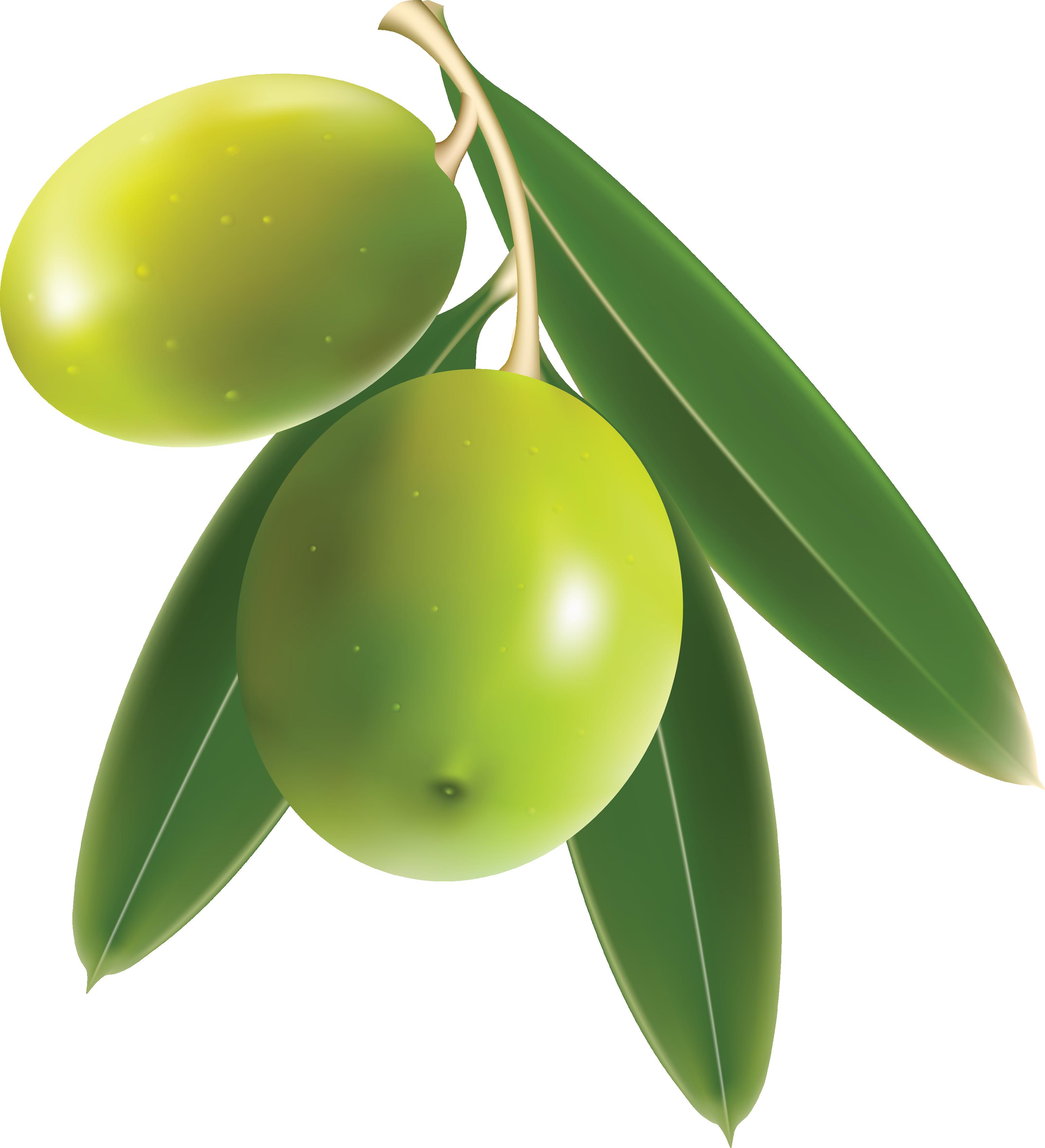 Olives PNG Image.