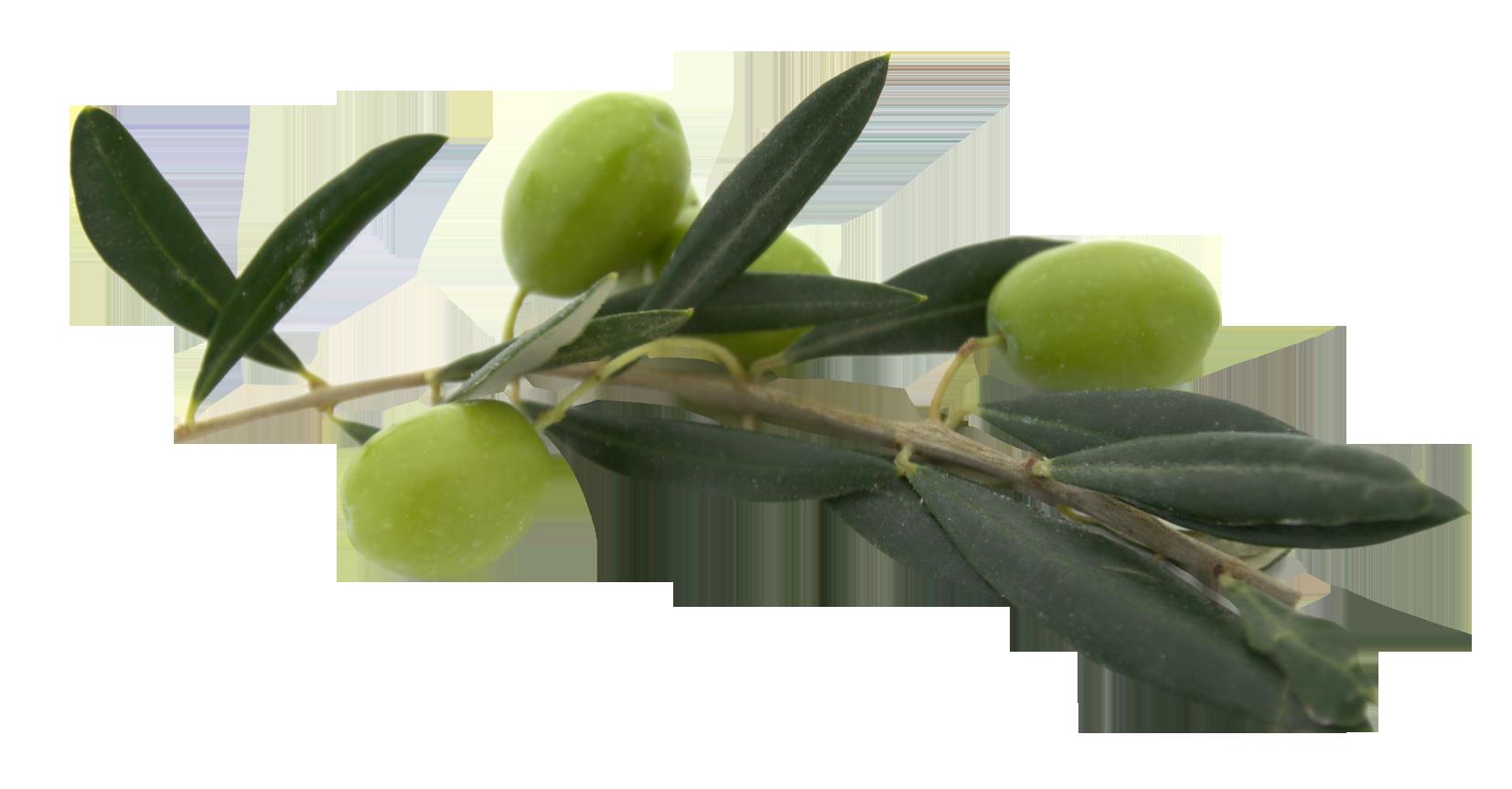 Olives PNG images free download, olive PNG.