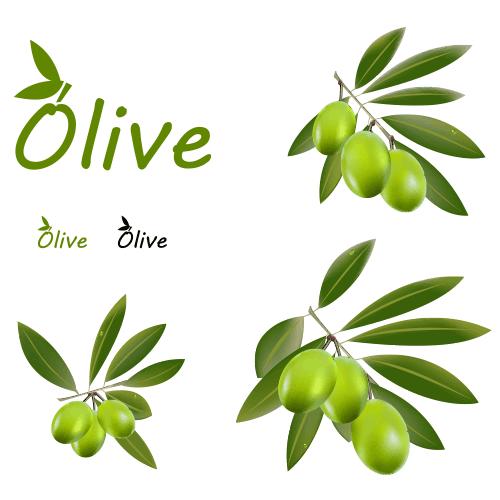 Aceitunas y hojas de olivo.