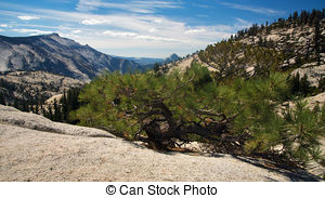 Stock Image of Olmsted Point Yosemite.
