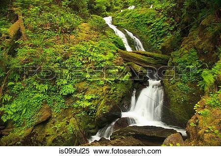 Stock Image of Seasonal creek, Graves Creek area, Olympic National.