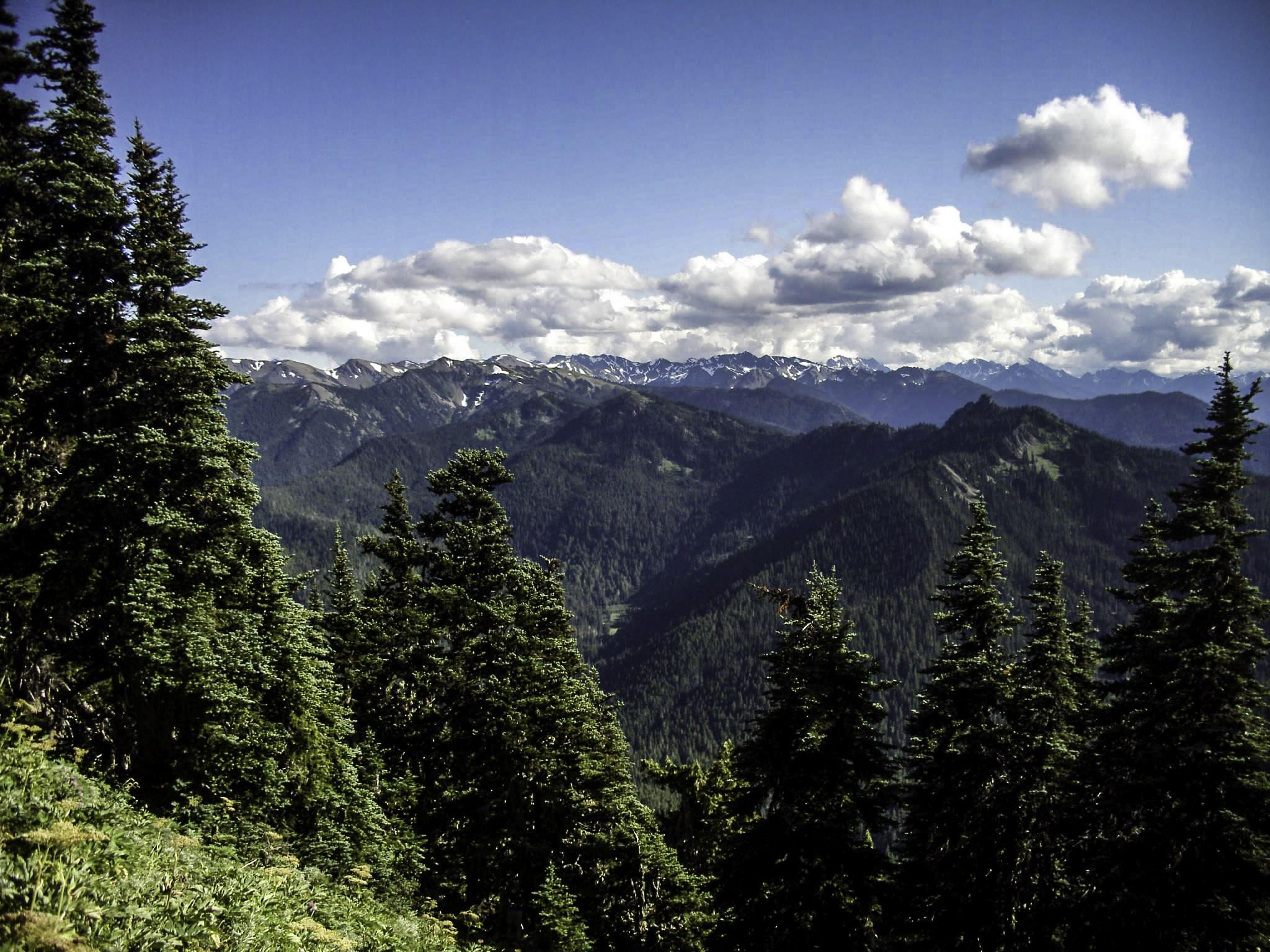 Switchback Trail at Olympic National Park, Washington.
