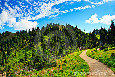 Summer Landscape, Olympic National Park Stock Photography.