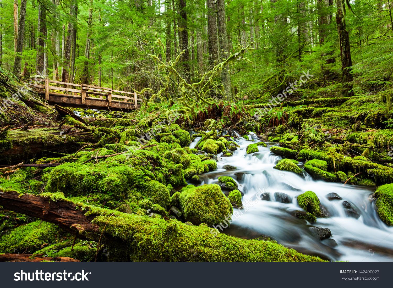Beautiful Cascade Waterfall Sol Duc Falls Stock Photo 142490023.