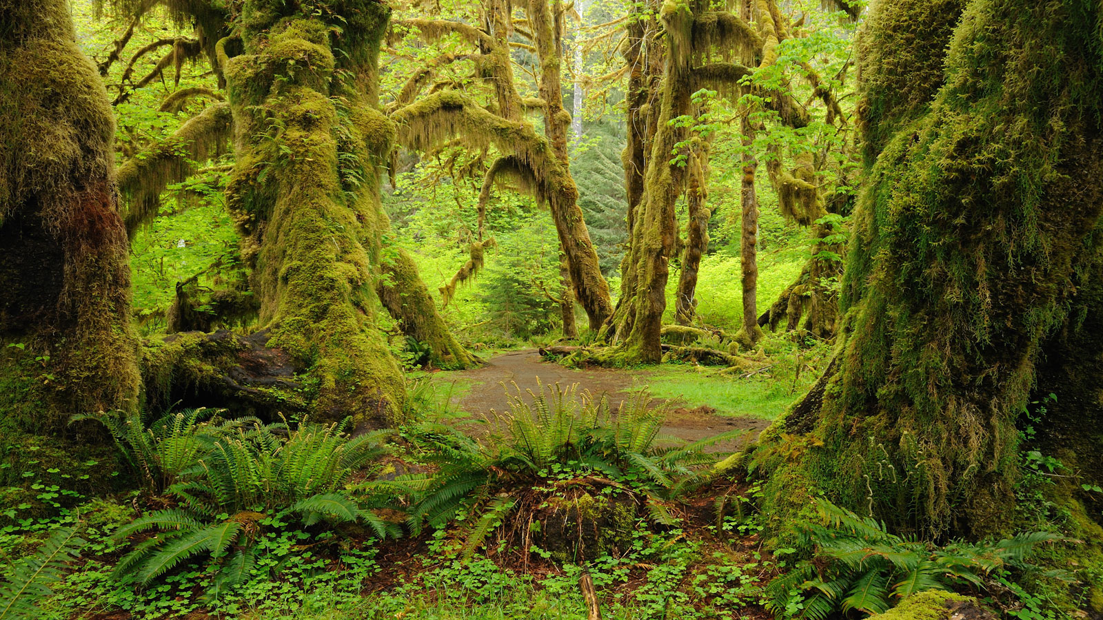 Olympic National Park.
