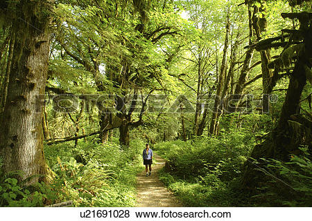 Pictures of Olympic National Park, WA, Washington, Olympic.