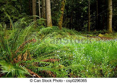 Stock Images of Washington trails.