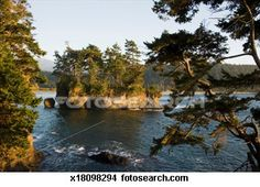 Olympic Rain Forest on the Olympic Penninsula Google Image Result.