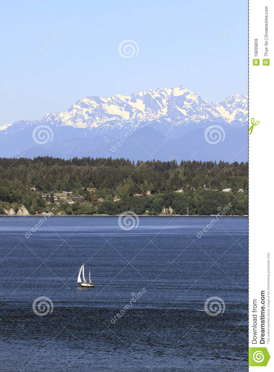 Sailing On Puget Sound With Olympic Peninsula View Royalty Free.