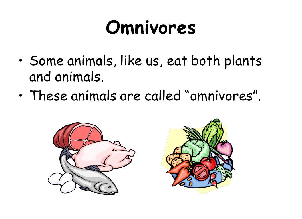 Carnivore food clipart.