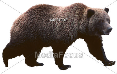 Stock Photo Brown Bear Clipart.