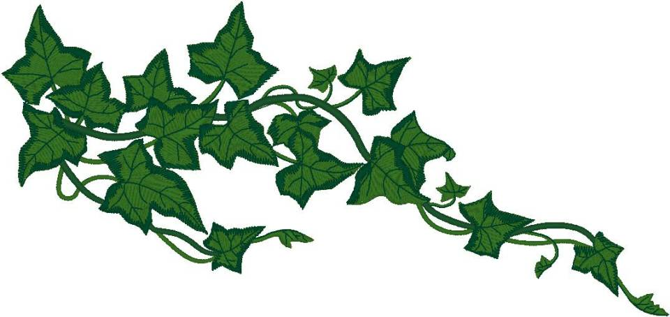 Pumpkin on the vine clipart.