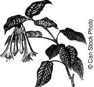 Onagraceae Vector Clipart Royalty Free. 6 Onagraceae clip art.