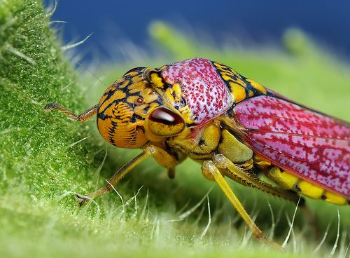1000+ images about Beautiful Creatures on Pinterest.