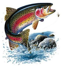 Oncorhynchus mykiss clipart #11