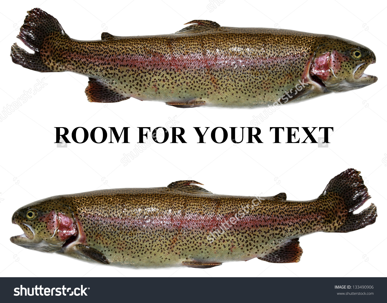 Rainbow Trout Aka Salmon Trout Oncorhynchus Stock Photo 133490906.