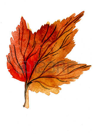 Leaf Litter Stock Illustrations, Cliparts And Royalty Free Leaf.