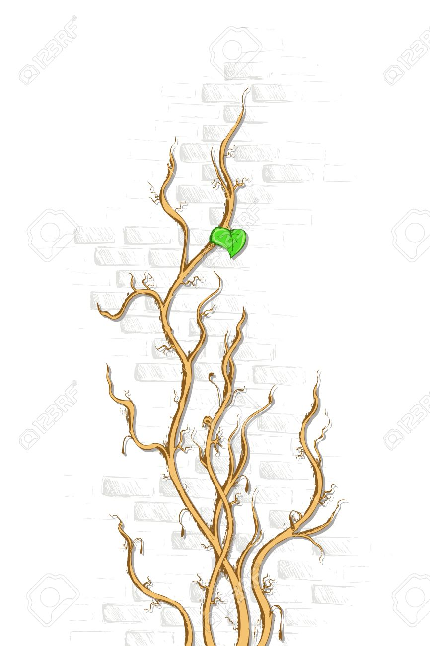 Illustration Of Dry Creeper Rising On Wall With One Leaf Royalty.