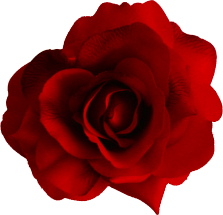 One red rose clipart.