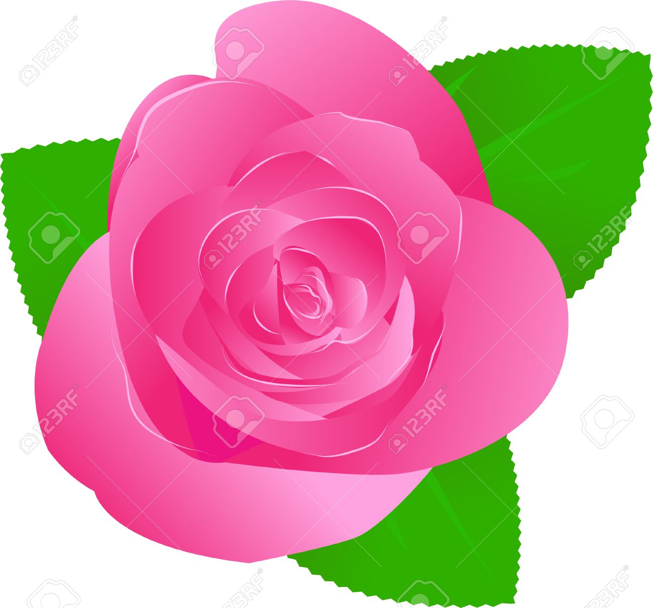One Vector Pink Rose With Green Leaves Royalty Free Cliparts.