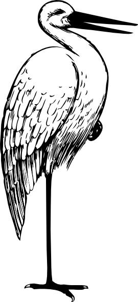 Bird Standing One Foot clip art Free vector in Open office drawing.