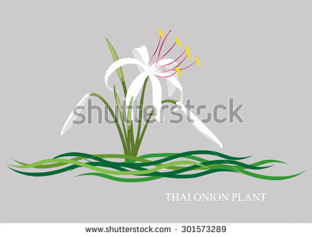 Onion Flower Stock Photos, Royalty.