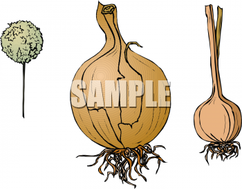 Food Clip Art Picture of an Onion, a Garlic Clove and a Chive.
