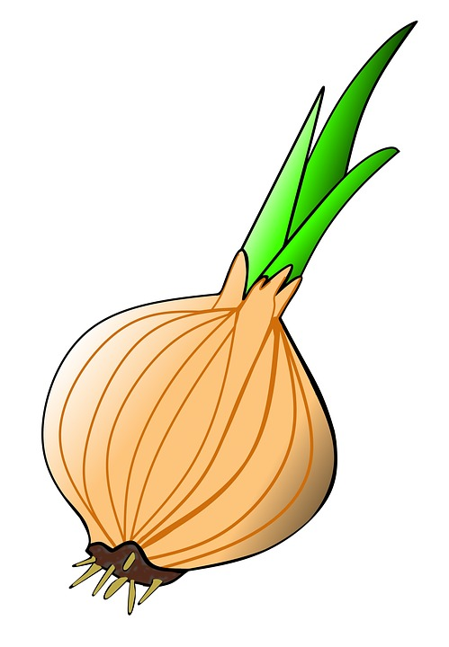 Onion bulb clipart - Clipground