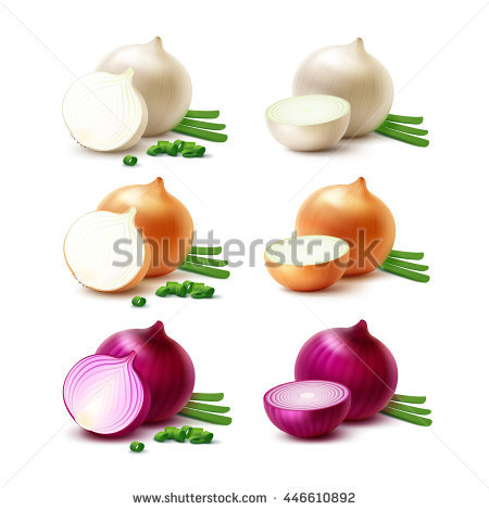 Vector Set Of Fresh Whole And Sliced White Yellow Red Onion Bulbs.