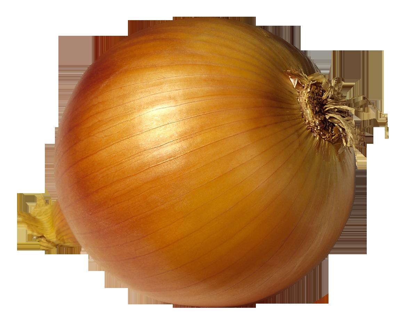 Onion Clipart.