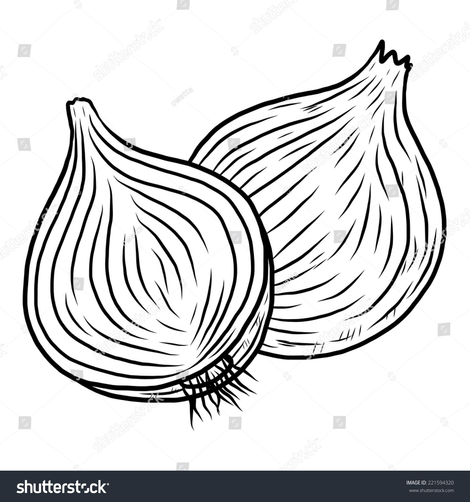 Onion black and white clipart 4 » Clipart Portal.