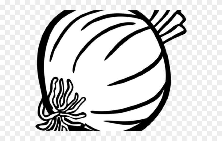 Drawn Onion White Png.