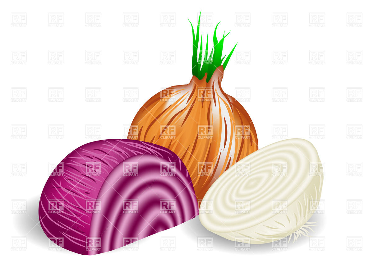 Onions in three colors on white background Vector Image #36212.