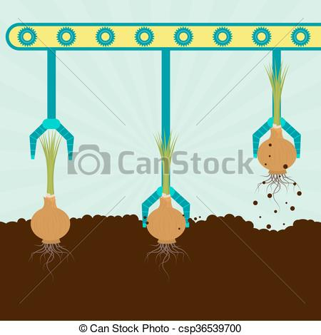 Vector Clipart of Mechanical harvesting onions.