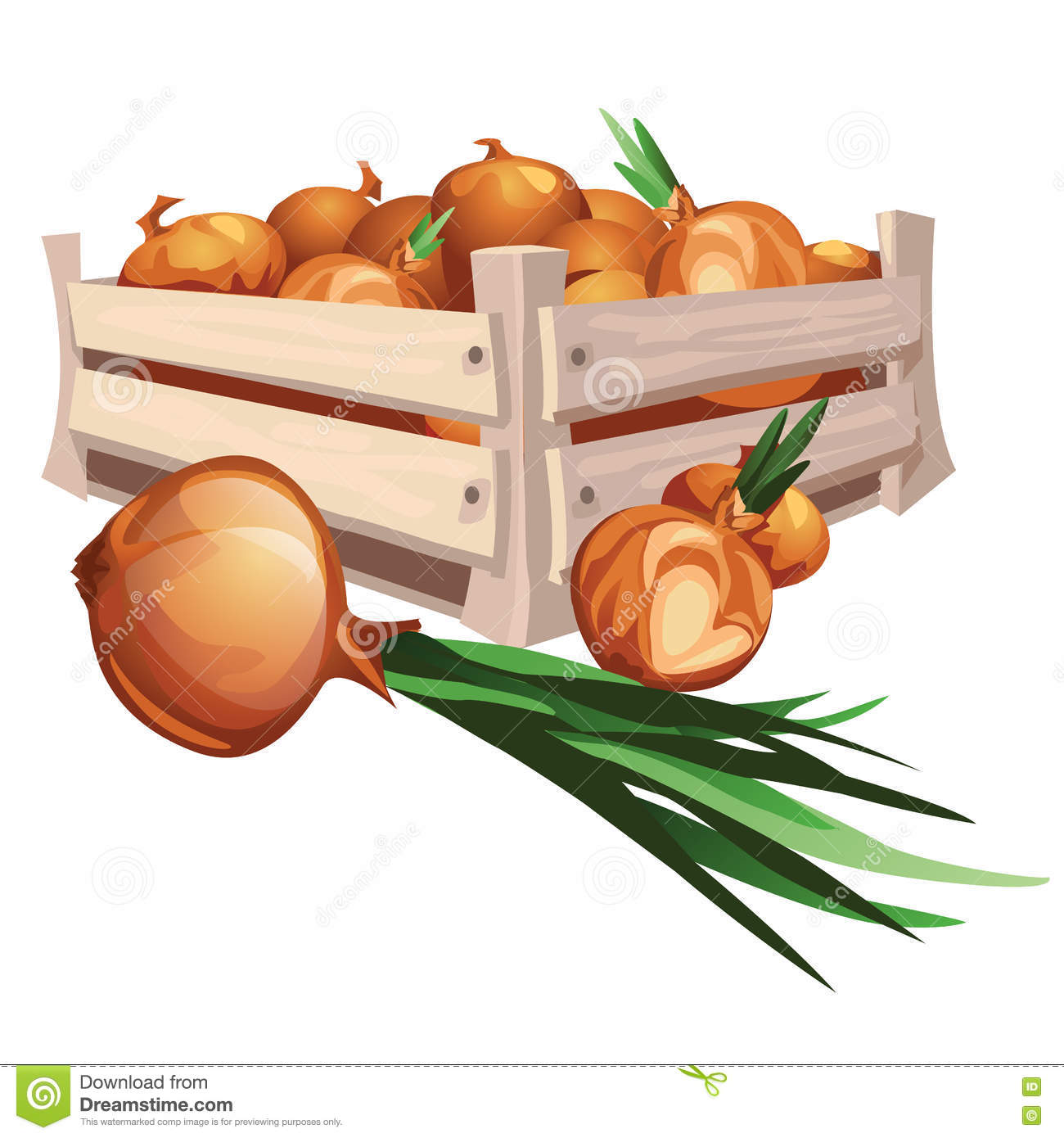 Onion Harvest In Wooden Box Stock Vector.