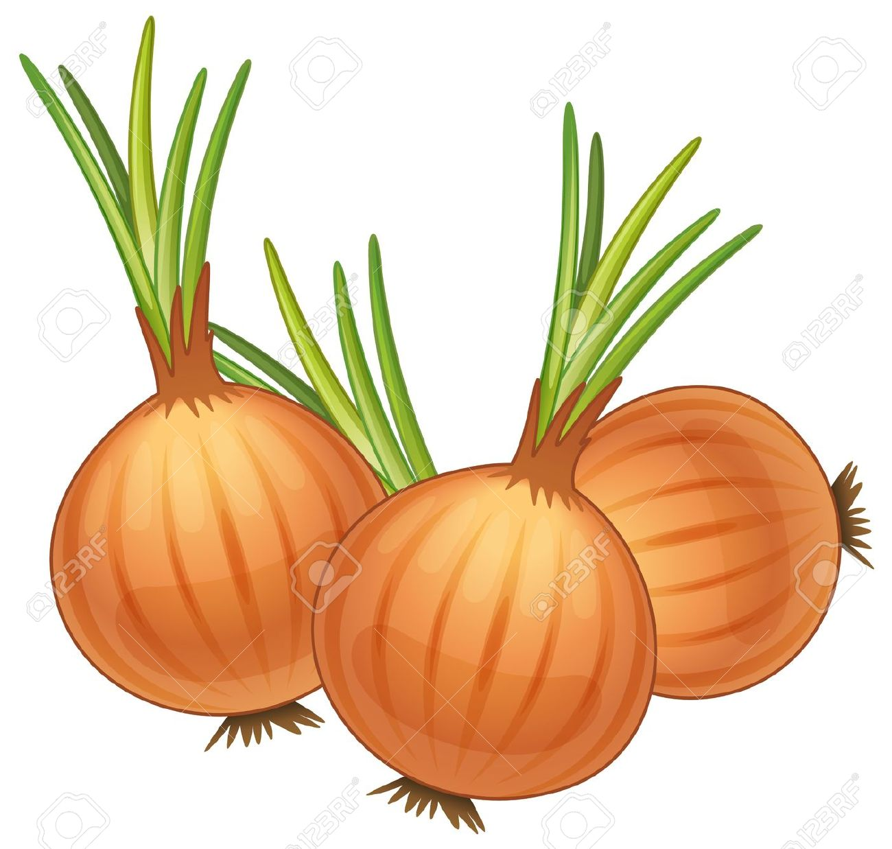 Onion clipart 1 » Clipart Station.