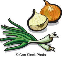Clipart of Onion.