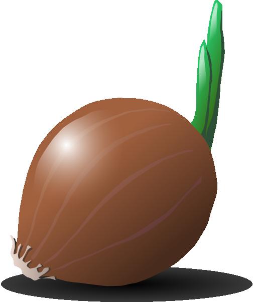 Onion clip art Free Vector / 4Vector.