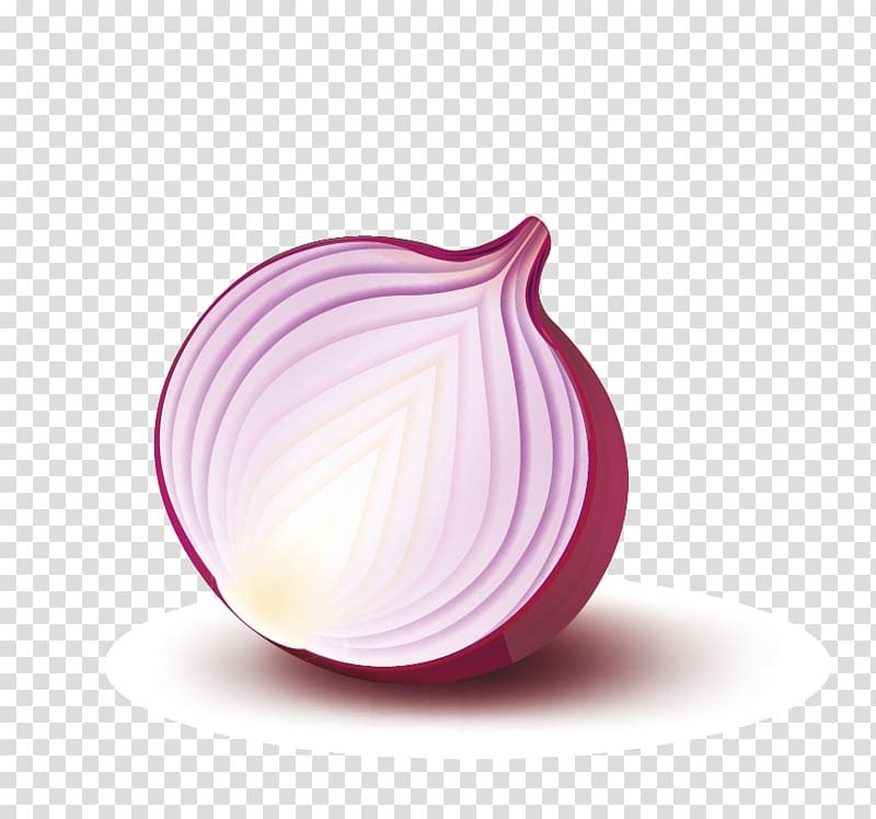 Onion Vector transparent background PNG cliparts free.